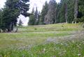 Mount Hood timberline alpine meadow in bloom P1709b.png
