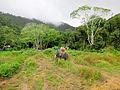 Mu Koh Lanta National Park.jpg