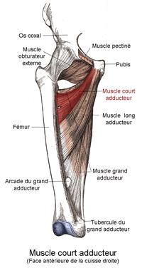 blessure hamstring