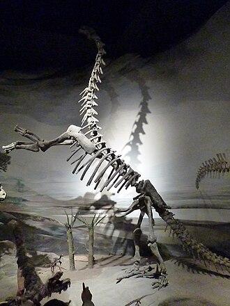 Epachthosaurus - Cast mounted in rearing pose, Museo Egidio Feruglio