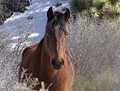 Mustang (19978644565).jpg