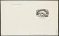 Myrmecophaga didactyla - 1700-1880 - Print - Iconographia Zoologica - Special Collections University of Amsterdam - UBA01 IZ21000046.tif