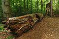 Národná prírodná rezervácia Stužica, Národný park Poloniny (17).jpg