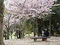 Nara Japan 5.jpg