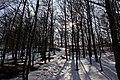 National nature resereve Jezerka in spring 2017 (5).JPG