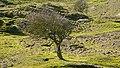 Nationalpark Niedersächsisches Wattenmeer Flora auf Norderney 07.jpg
