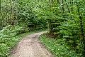Naturbëschreservat «Beetebuerger Bësch»-110.jpg