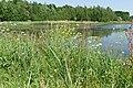 Natuur De Kroeten P1140778.jpg