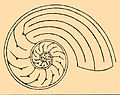 Nautilus Labyrinth.jpg