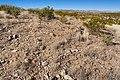Near Canyon del Molino Viejo - Flickr - aspidoscelis.jpg