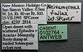 Neivamyrmex swainsonii casent0102764 label 1.jpg