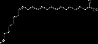 Strukturformel von Nervonsäure