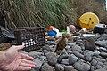 Nesocichla eremita -Inaccessible Island, British overseas territory-8 (2).jpg