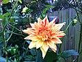 Nice Flower (9158662892).jpg