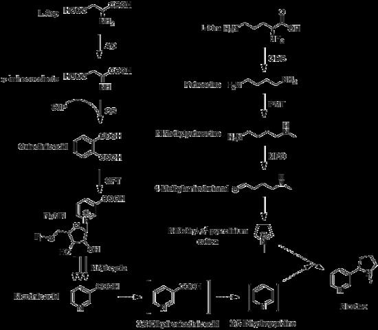 proses biosintesis steroid