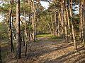 Niedersachsen Otternhagener Moor Weg durchs Moor JG 01.jpg