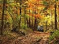Niva v jesennom lese - panoramio.jpg
