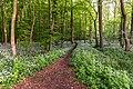 Nordkirchen, Naturschutzgebiet Ichterloh -- 2018 -- 2325.jpg
