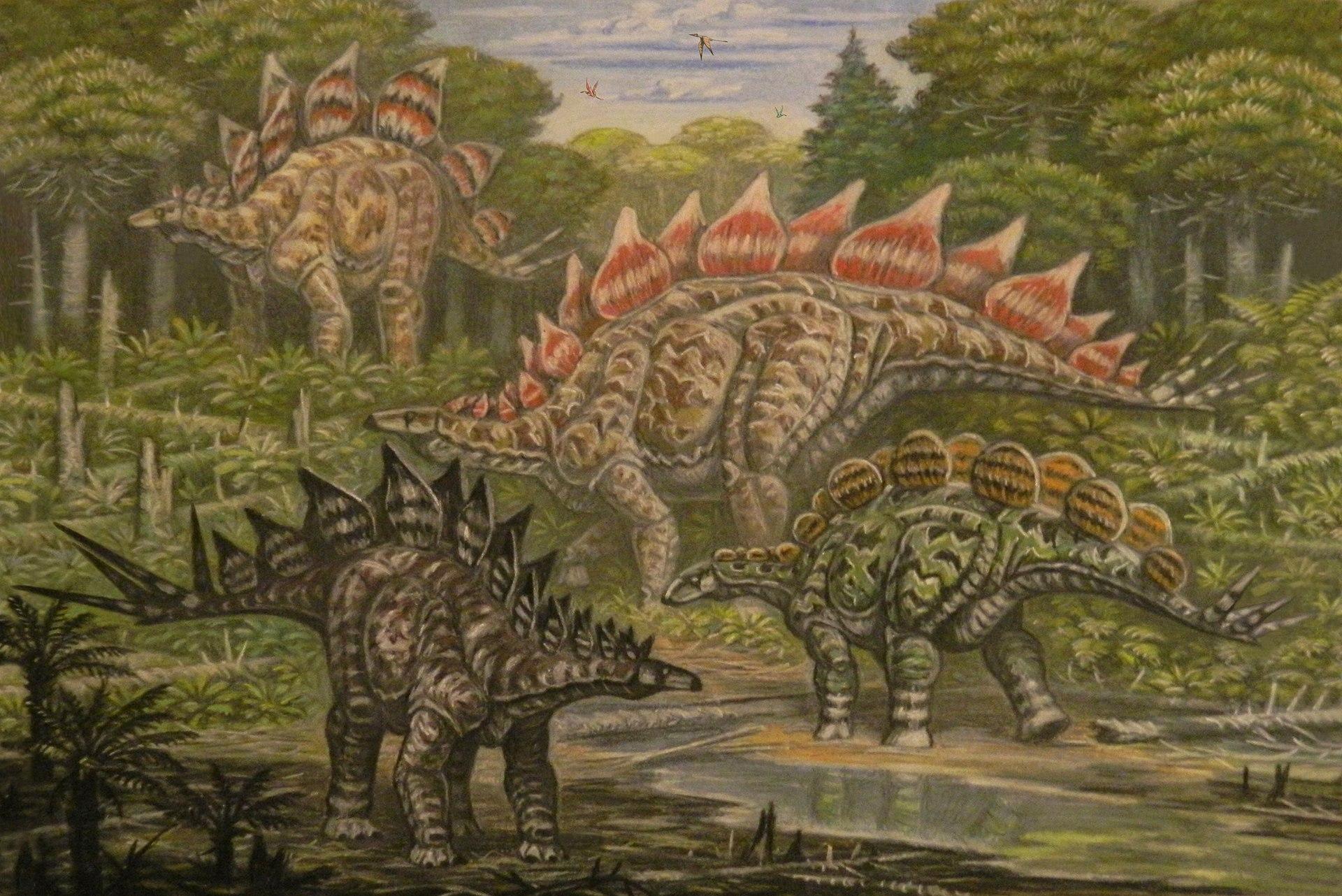 North American Stegosauridae.jpg