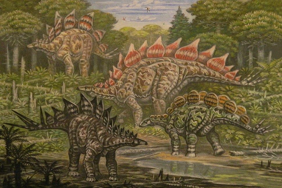 North American Stegosauridae