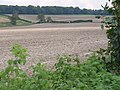 North Downs, South of East Clandon - geograph.org.uk - 549865.jpg