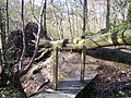Novel steps over fallen tree trunk - geograph.org.uk - 1262200.jpg