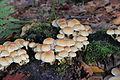 Obernau - Pilze im Wald 01.jpg