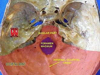 Internal occipital crest - Image: Occipital bone 3