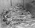 Ohrdruf Corpses.jpg