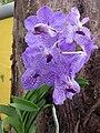 Orhideje 12.jpg