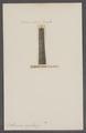 Orthoceras regularis - - Print - Iconographia Zoologica - Special Collections University of Amsterdam - UBAINV0274 091 03 0003.tif