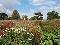 Osborne House Walled Garden 3.jpg