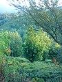 Otaghvar - panoramio.jpg