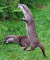 Otters (2762650976).jpg
