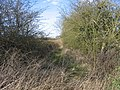 Overgrown towing horse path. - geograph.org.uk - 154566.jpg