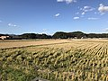 Paddy fields near Shin-Toyotsu Station 2.jpg