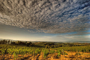 Abrusco - Abrusco is a minor blending grape grown in the Chianti zone (vineyard pictured) in Tuscany.
