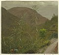 Painting, Wild Sugar Cane, Jamaica, 1865 (CH 18200603).jpg