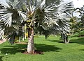 Palmetum4.jpg