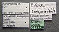 Paratrechina pubens casent0173236 label 1.jpg