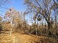 Park Along Aberjona River - Winchester, MA - DSC04228.JPG