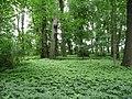 Park w Strzelcach Opolskich - panoramio - romstar (2).jpg