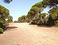 Parque de Doñana 20210610 65.jpg
