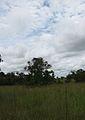 Parque nacional Aguaro-Guariquito 039.jpg