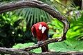 Parrot - panoramio (1).jpg