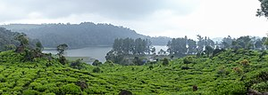 Bandung Regency - Patenggang Lake is a popular tourist attraction in Bandung Regency