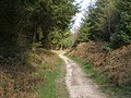 Path down Tolpuddle Hollow, Puddletown Forest - geograph.org.uk - 396457.jpg