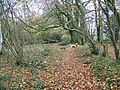 Path in Mean Wood - geograph.org.uk - 1053171.jpg