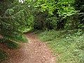Path in the iron age ditch - geograph.org.uk - 1142099.jpg