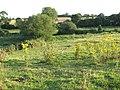 Path through cattle pasture - geograph.org.uk - 1422644.jpg